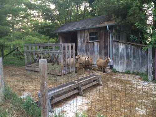 sheep shop.jpg
