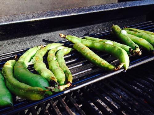 fava beans cooking.JPG