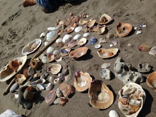shells stinson